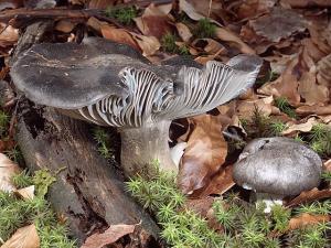 Foto: valentirasa.blogspot.com