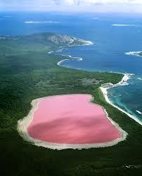 llac rosa