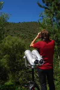 En ple cens de voltors a MónNatura Pirineus