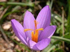 Foto: www.wiquipedia.org