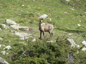 Imatge: Arxiu del Parc Nacional d'Aigüestortes i Estany de Sant Maurici