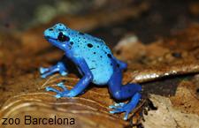 Font: Zoo Barcelona