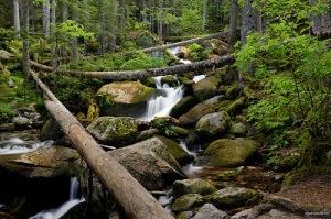 Bosc del Gerdar (Font: http://pponavarro.blogspot.com.es)