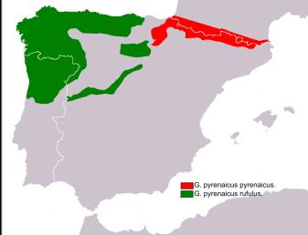 Mapa de distribució. Font: https://galemys.org