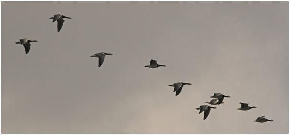 migració