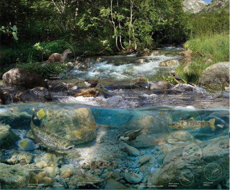 Exemple d'ecosistema aquàtic. Font :www.lifelimnopirineus.eu.